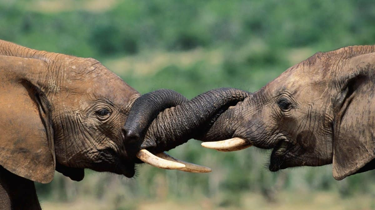 -Animals-Elephants-Baby-Elephant-Baby-Animals-Fresh-New-Hd-Wallpaper--