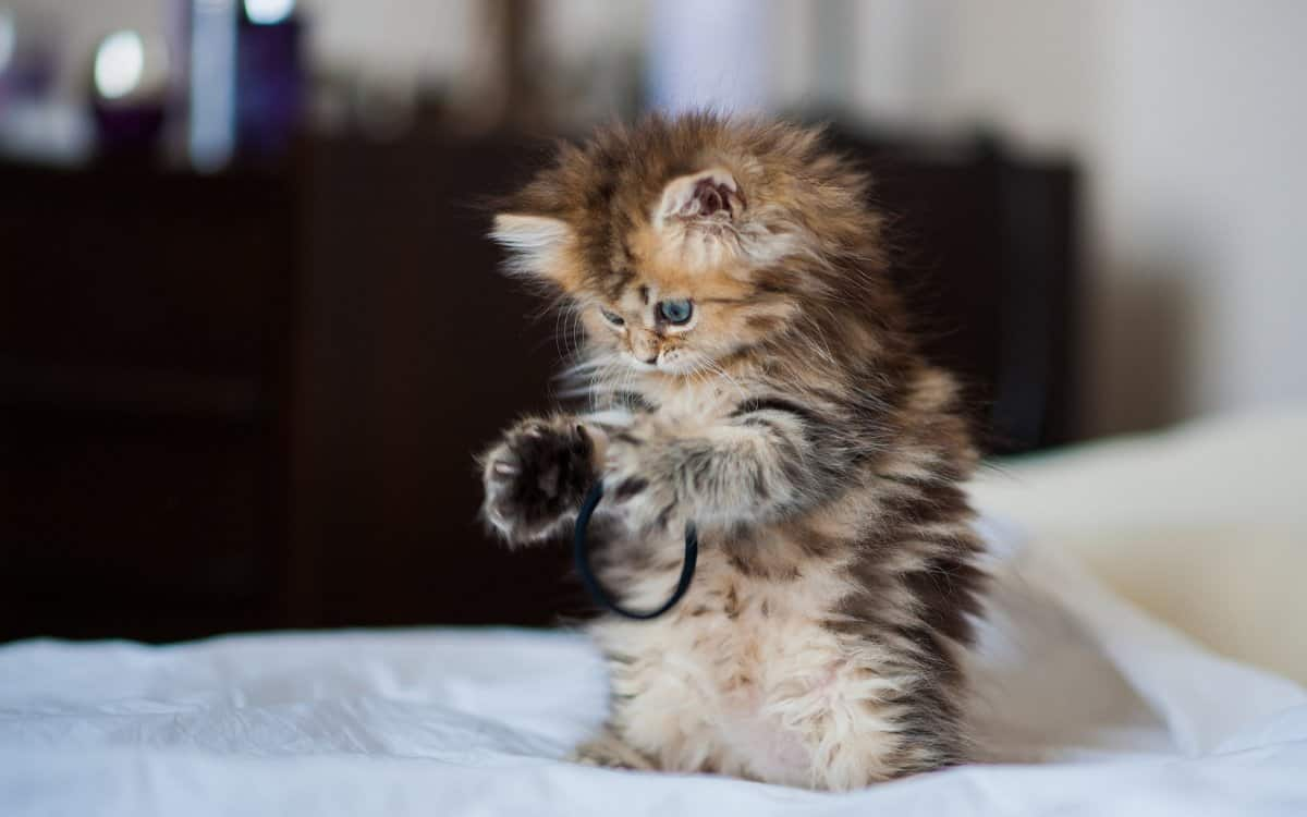 cute-kitty-playing