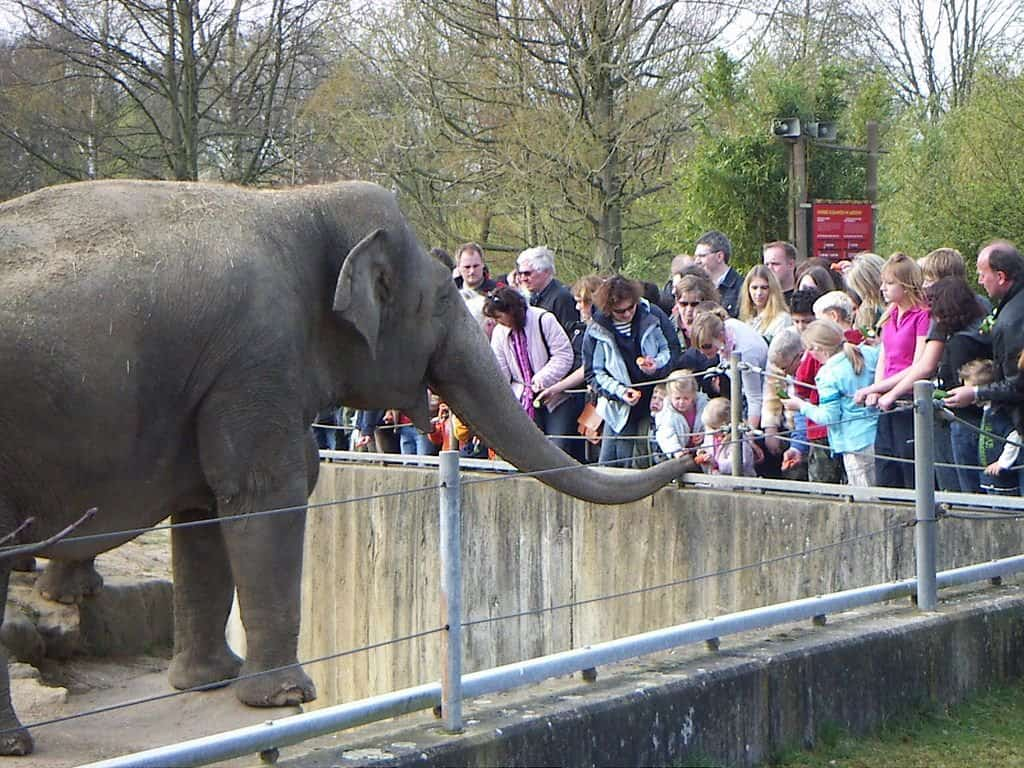 The Ethics of Zoos - Why We'd Always Just Say NO