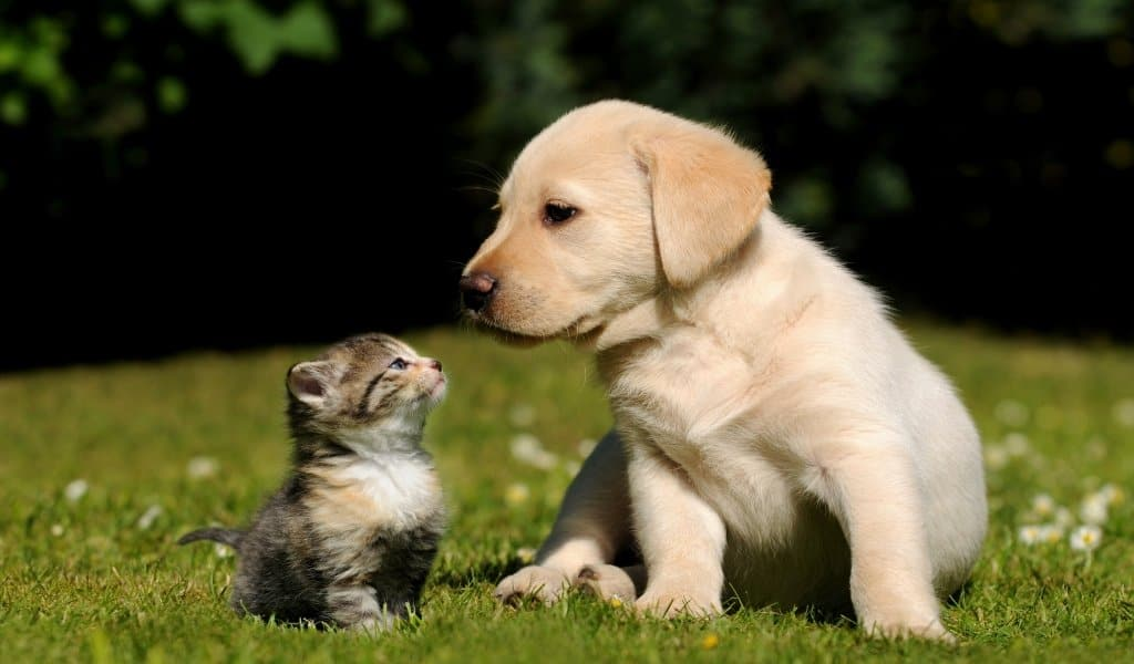cute-nature-girls-images-cat-and-dog-friends-hd-359800