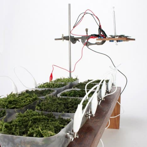 Worlds-first-moss-powered-radio_dezeen_2sq