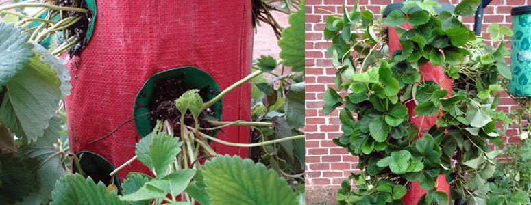 strawberry-tree-vertical-hanging-grow-bag-xl