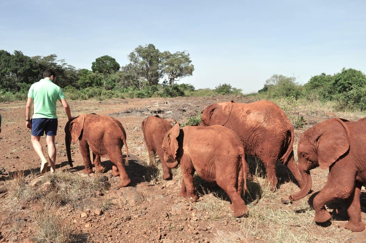 Oliver walking with elephants DSWT