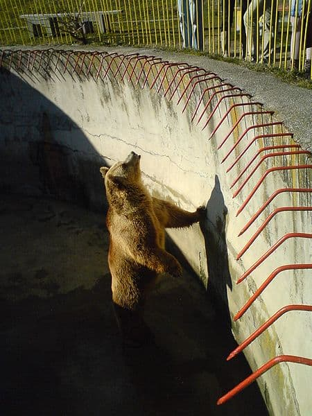 450px-File-Bitola_Zoo_Bear_2