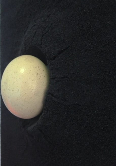 Bettina Werner Salt Egg