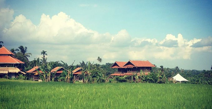 PradnyaView-with-Rice-Paddies