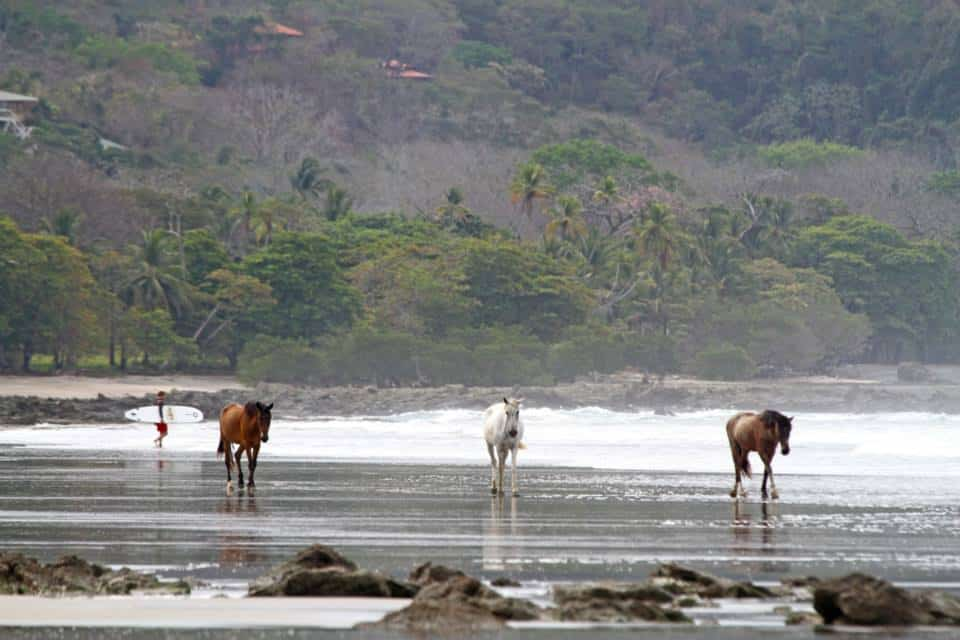 horses-on-the-beach