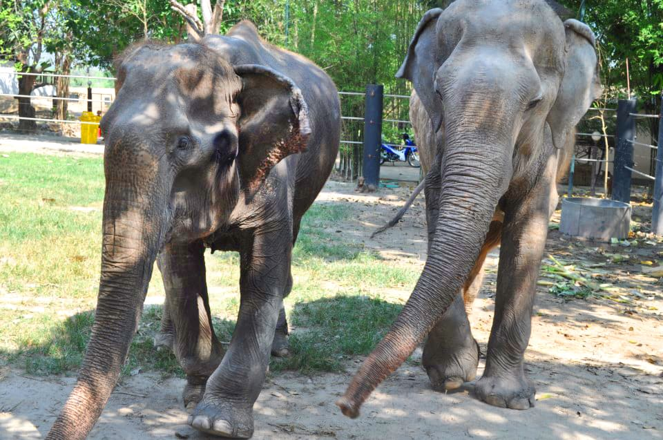 Thailand-elephant-sanctuary-1