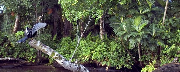 costa-rica-rainforest