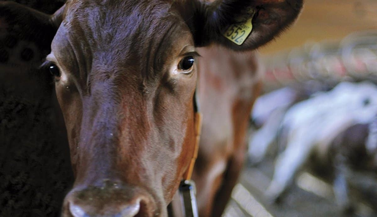 Why Dairy Is Bad For You