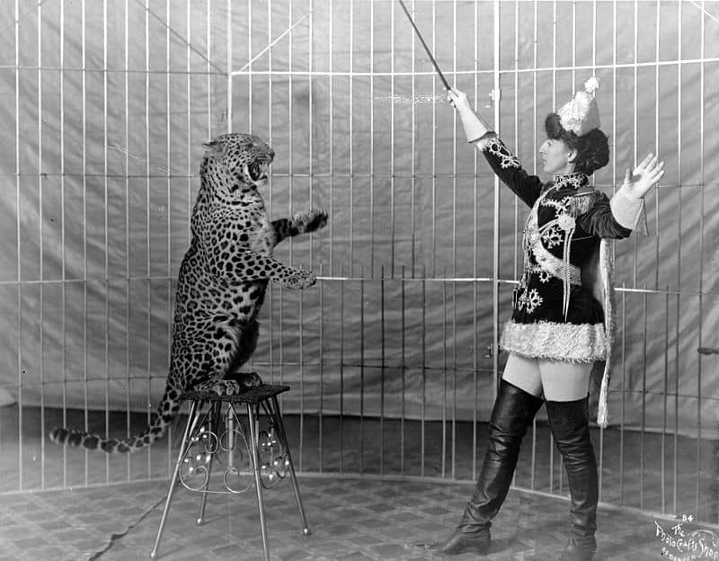800px-Female_animal_trainer_and_leopard,_c1906