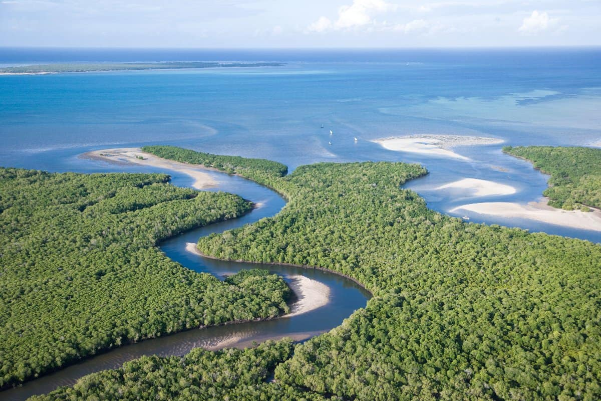 Magrove forests line the coast north of Pemba beside the Quirimbas Archipelago, Mozambique