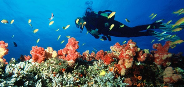 mozambique-articles-diving-590