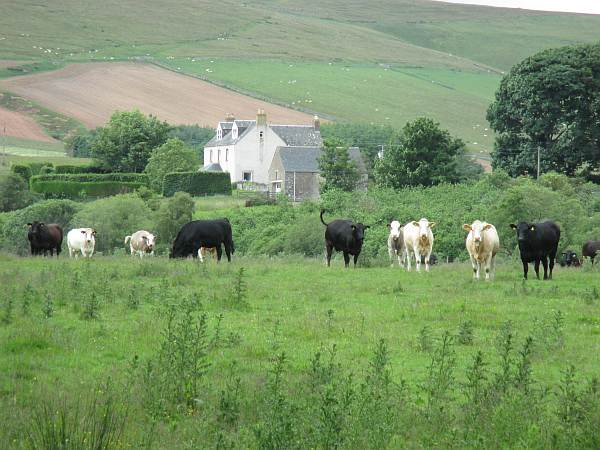 Cranshaws-Castle-luxurious-Scottish-getaway-Saying-hello-to-the-locals...-of-course-the-cows...