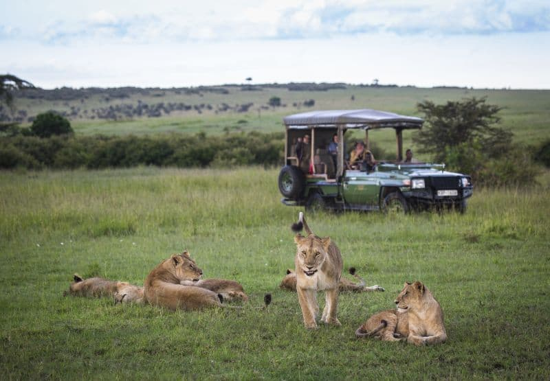 MaraPlainsCamp-Safari-Experience-GreatPlainsConservation-20