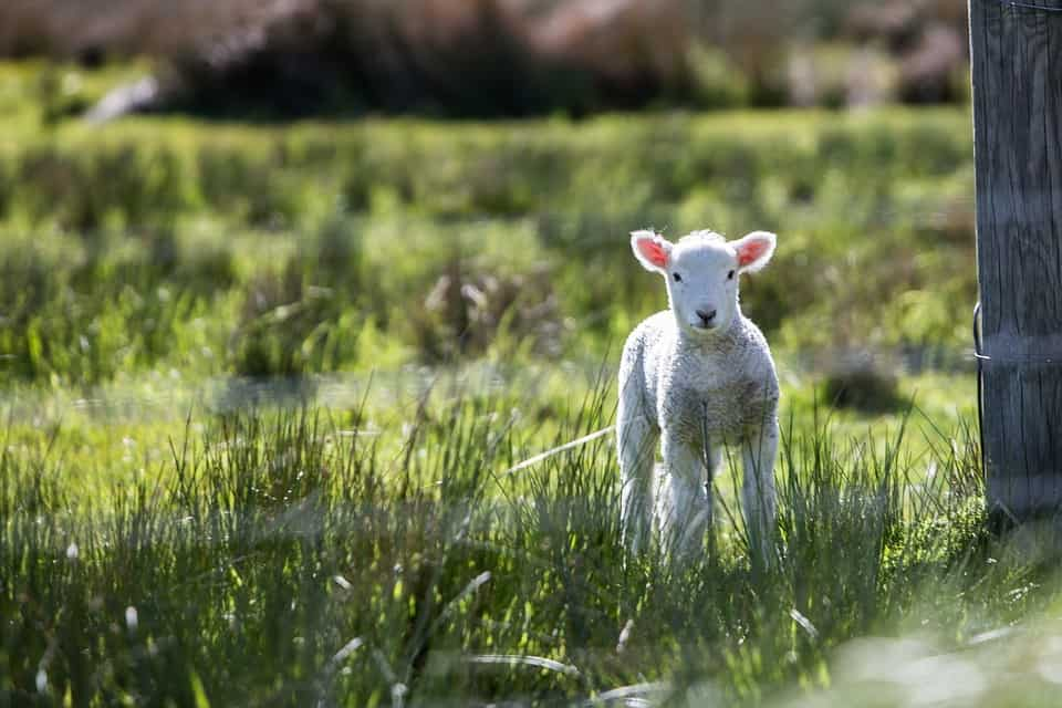 Is Wool Ethical
