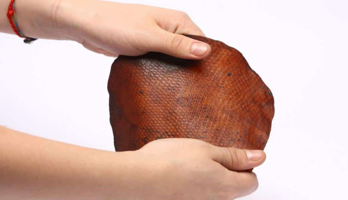 Meet Le Qara, A Vegan Leather Made From Microorganisms!
